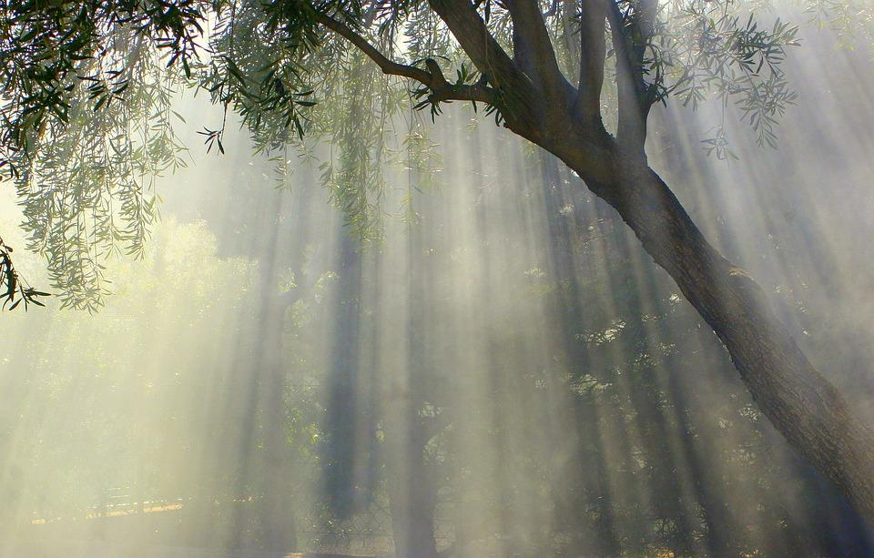 foggy-1077725_960_720
