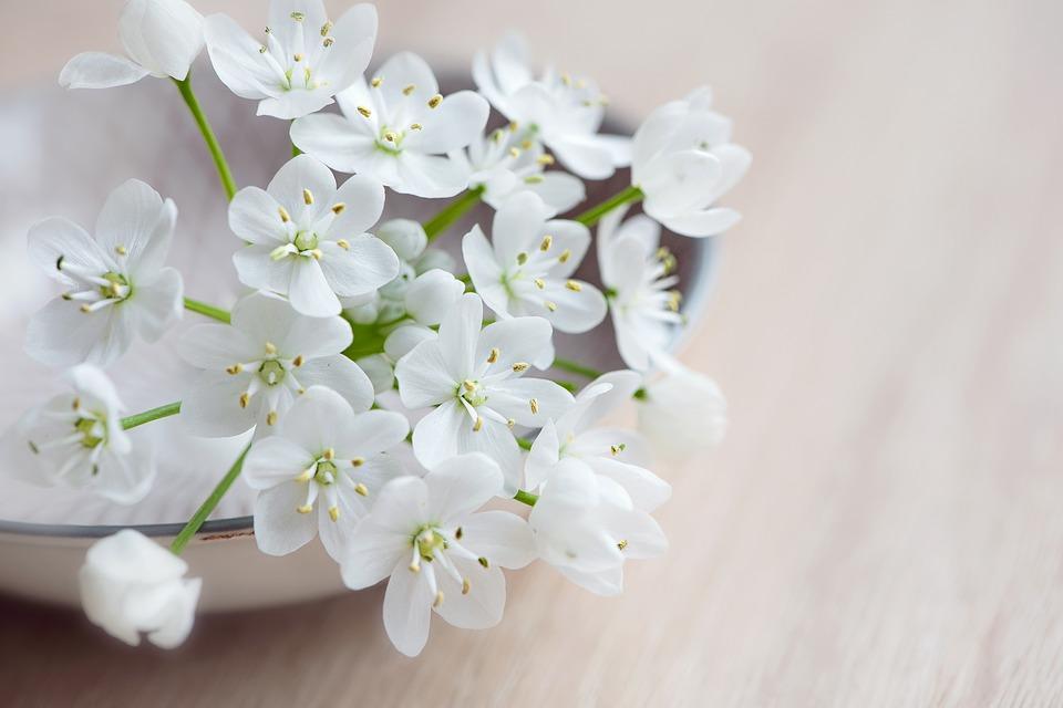 flower-1291102_960_720