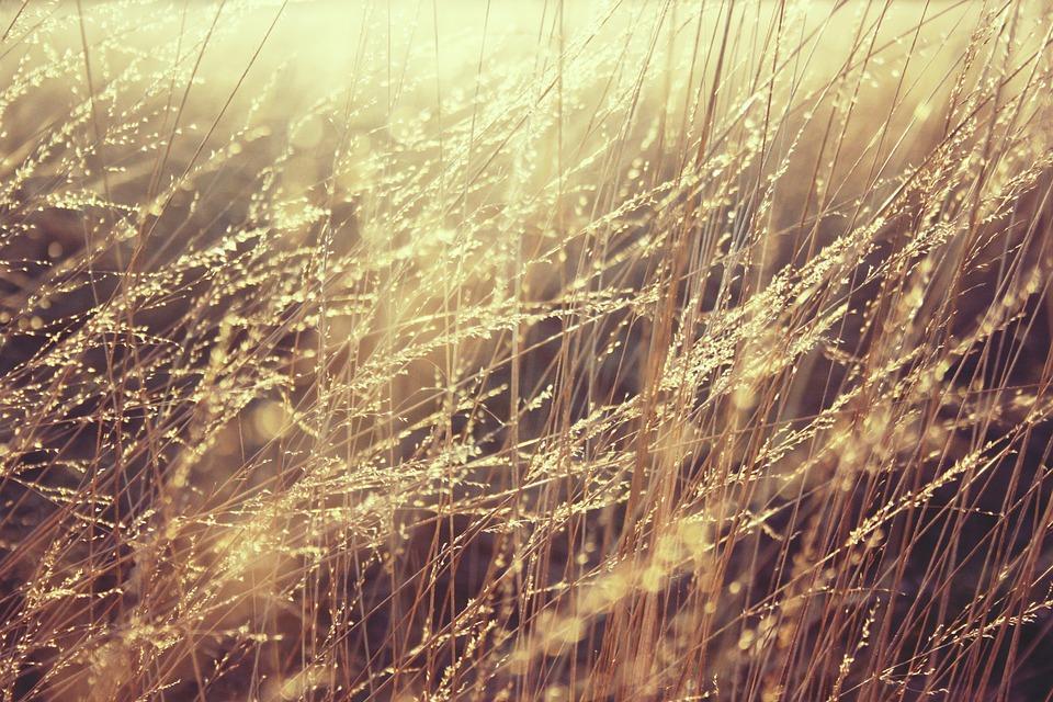 grass-835270_960_720