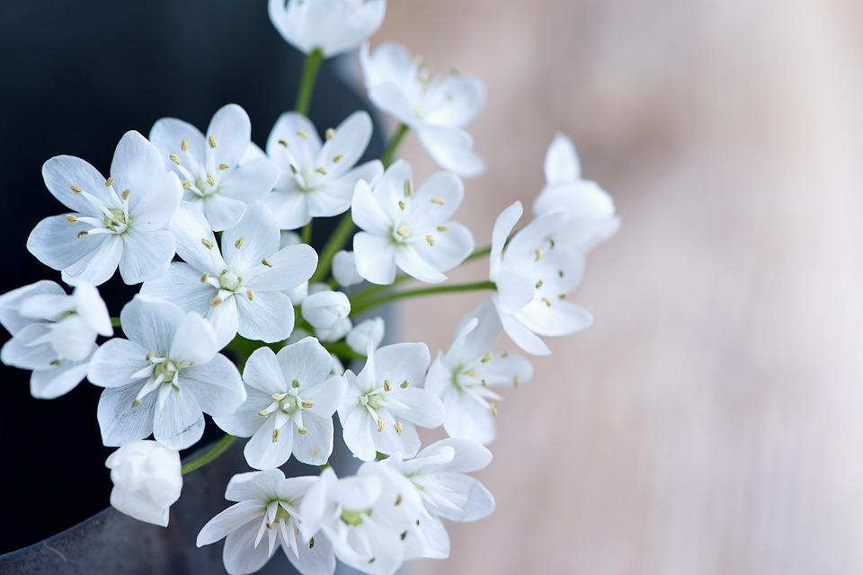 flower-1351417_960_720