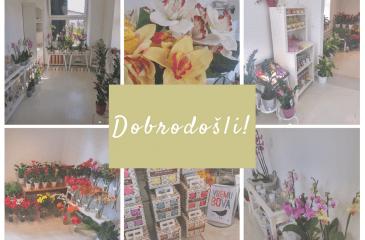 Aroha-cvetličarna&darilni butik